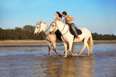 Young couple in the sea on horseback — Stock Photo