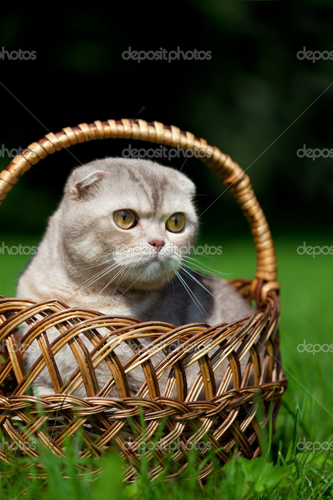 Image of cute little cat on the nature — Stock Photo #11291920