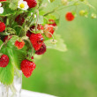 Bouquet of strawberries — Stock Photo