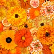 Orange Flower Background — Stock Photo