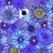 Blue Flower Background — Stock Photo #11304917