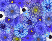 Blue Flower Background — Stock Photo
