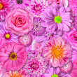 Pink Flower Background — Stock Photo #11513011