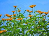 Beautiful wildflowers — Stock Photo