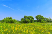 Meadow with flowers against the blue sky — Stock Photo
