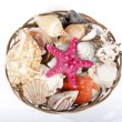 Seashells — Stock Photo #11513073