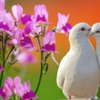 Royalty-Free Stock Photo: Two loving white doves and butterfly orchid flower