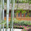 Bamboo groves and hut - Stock Photo