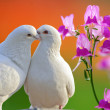 Stock Photo: Two loving white doves and butterfly orchid flower