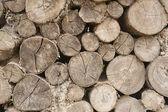 Cumulate round log — Stock Photo