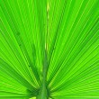 Details of green palm leaf — Stock Photo #10794528