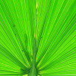 Details of green palm leaf — Stock Photo