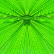 Closeup of green palm leaf — Stock Photo #10795743