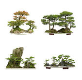 Collection of the best china bonsai with white isolated background — Stock Photo