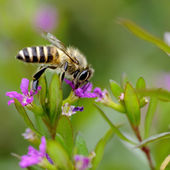 A interesting bee on flower — Stock Photo
