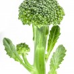 Broccoli — Stock Photo #10823206