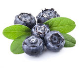 Blueberries and leaves — Stock Photo