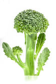 Broccoli — Photo