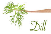 Dill leaves — Stock Photo