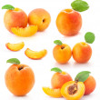 Collection of apricot fruits — Stock Photo