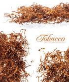 Premium rolling tobacco — Stock Photo