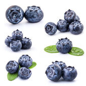Collection of Blueberries — 图库照片