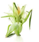 Espiga de milho fresca — Foto Stock