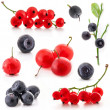 Red currant and bilberry — Stock Photo