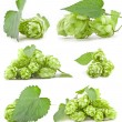 Collection of Hops — Stock Photo #11819653
