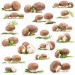 Collection of fresh Mushroom - Stock Photo