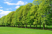 Tree line in the popular Vigeland park — Stock Photo