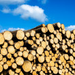 Pile of pine - Stock Photo