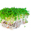Garden cress isolated on white — Stock Photo