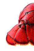 Tail of lobster — Stock Photo