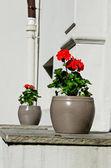 два горшки цветы — Стоковое фото