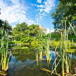 Stock Photo: Garden lake