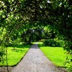Garden arch — Stock Photo #12333465