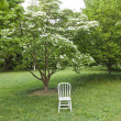 White chair in the park. Ready for photo shoot. — Stock Photo
