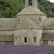 Abbey Senanque and lavender field — Stock Photo
