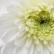Details of white flower for background or texture — Stock Photo #11314101