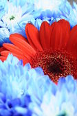 Macro of red flower and blue bouquet — Stock Photo
