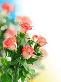 Background with beautiful rose — Stock Photo