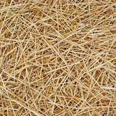 Straw texture background — Stock Photo