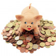 Porky with coins — Stock Photo #10976321
