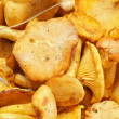 Chanterelles Background — Stock Photo