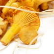 Fresh Raw Chanterelle Mushrooms — Zdjęcie stockowe