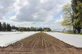 Tarpaulin for Crops — Stockfoto