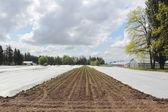 Plandeki do uprawy — Zdjęcie stockowe
