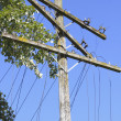 Close on downed and damaged hydro electric and telephone lines - Stock Photo