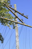 Close on downed and damaged hydro electric and telephone lines — Stock Photo